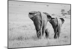 Three Butts! by Ali Khataw