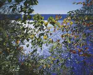 Dark Autumn Leaves by Alice Dalton Brown