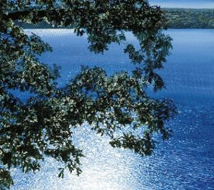 Silver Light, 2006 by Alice Dalton Brown