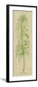 Arecaceae Leaf by Alicia Ludwig