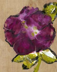 Camellia Passion II by Alicia Ludwig