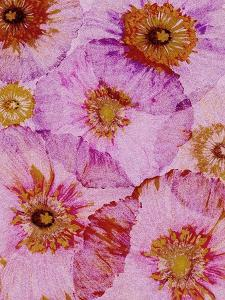 Crepe Paper Flowers I by Alicia Ludwig