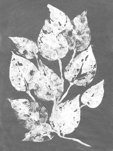 Frosty Philodendron I by Alicia Ludwig