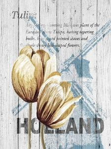 Holland Tulips by Alicia Soave