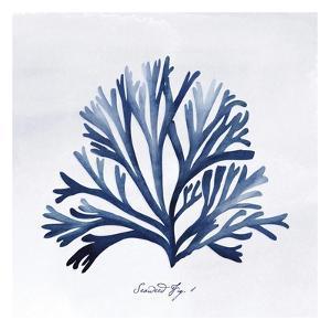 SeaweedFig1 by Alicia Vidal