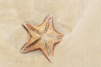 Caribbean, Anguilla. Close-Up Shot of Starfish in Sand