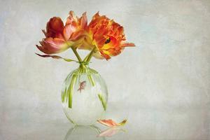 Untitled by Alida van Zaane