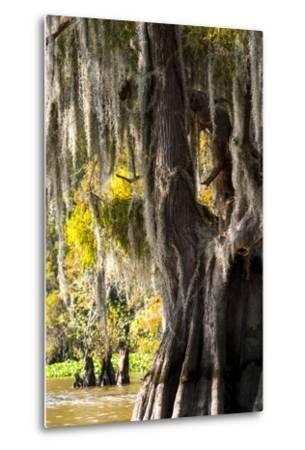 Bald Cypress Closeup, Lake Fausse Point State Park, Louisiana, USA