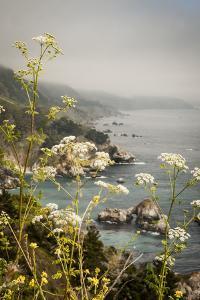 California, Big Sur, View of Pacific Ocean Coastline with Cow Parsley by Alison Jones