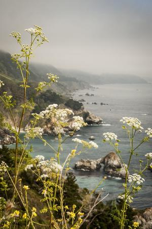 California, Big Sur, View of Pacific Ocean Coastline with Cow Parsley