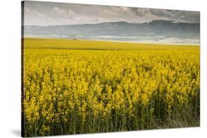 Idaho, Snake and Salmon River Basins, Wildflowers in Bloom by Alison Jones