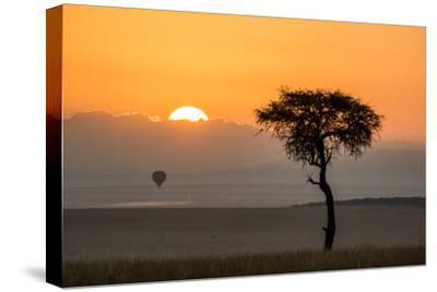 Kenya, Maasai Mara, Sunrise Behind Balanites Tree and Hot Air Balloon