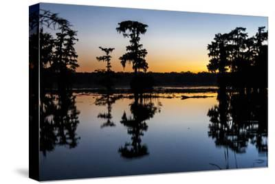 Lake Martin at Sunset with Bald Cypress Sihouette, Louisiana, USA
