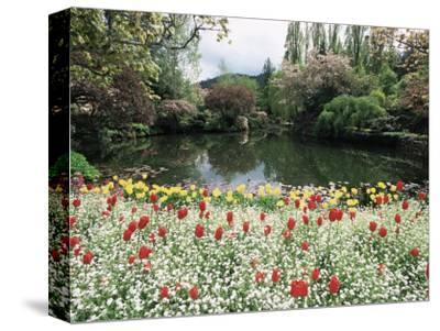 Tulips in the Butchart Gardens, Vancouver Island, Canada, British Columbia, North America