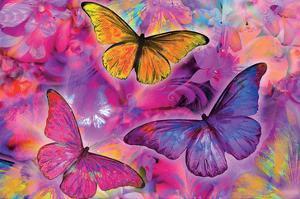 Rainbow Orchid Morpheus by Alixandra Mullins