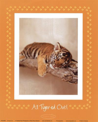 All Tiger-ed Out-Rachael Hale-Art Print