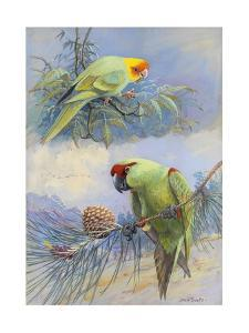 A Painting of a Carolina Parakeet and a Thick-Billed Parrot by Allan Brooks
