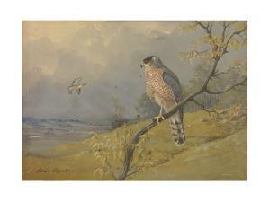 A Painting of a Cooper's Hawk Perched on a Branch by Allan Brooks