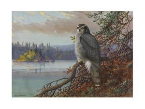A Painting of a Perched Northern Goshawk by Allan Brooks