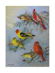 A Painting of a Pyrrhuloxia and Two Species of Tanager by Allan Brooks