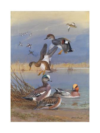 A Painting of American Widgeons, Eurasian Widgeons, and Gadwalls