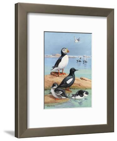 A Painting of an Atlantic Puffin, Black Guillemots, and Dovekies