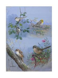 A Painting of Bush-Tits, a Verdin, a Creeper, and a Wren-Tit by Allan Brooks