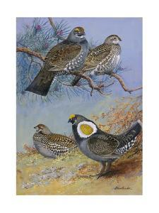 A Painting of Mating Pairs of Two Different Species of Grouse by Allan Brooks