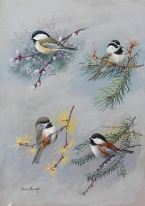 A Painting of Several Species of Chickadee by Allan Brooks