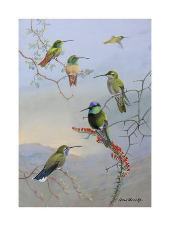 A Painting of Several Species of Hummingbirds Perched on Branches