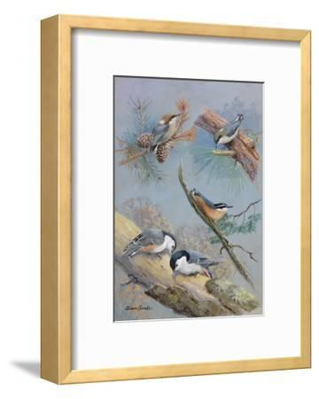 A Painting of Several Species of Nuthatch