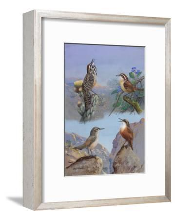 A Painting of Several Wren Species
