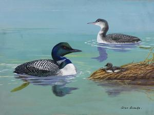 A Painting of Three Loons at Different Life Stages by Allan Brooks