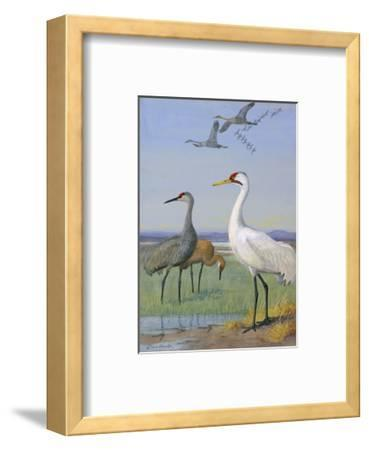 A Painting of Three Species of Cranes