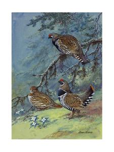 A Painting of Two Different Species of Grouse by Allan Brooks