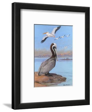 A Painting of Two Different Species of Pelican
