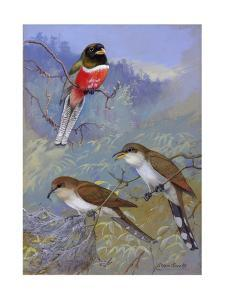 A Painting of Two Species of Cuckoo and a Coppery-Tailed Trogon by Allan Brooks