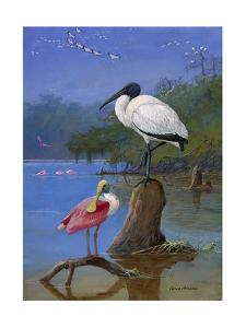A Wood Ibis Perches with a Roseate Spoonbill on Dead Tree Limbs by Allan Brooks