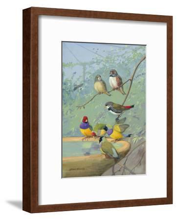 Finches Perch on the Edge of a Birdbath