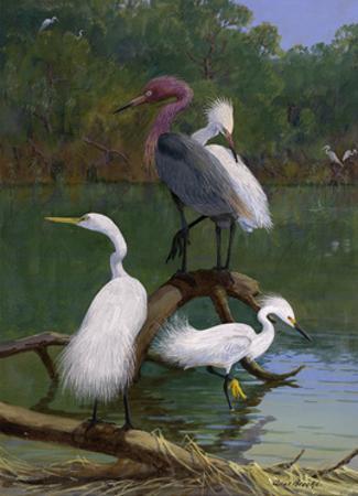 Snowy and Reddish Egrets