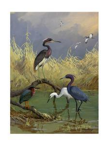 Various Herons Feed in Shallow Water by Allan Brooks
