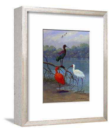 Various Ibis Perch Lakeside