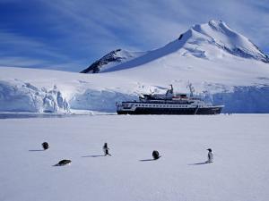 Antarctic Peninsula, Port Lockroy, Gentoo Penguins and Cruise Ship Clipper Adventurer, Antarctica by Allan White