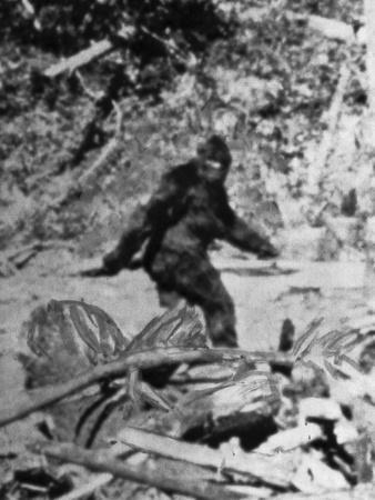 https://imgc.artprintimages.com/img/print/alleged-photo-of-bigfoot_u-l-q1g8tt40.jpg?p=0
