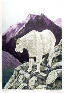 Capricorn by Allen Friedman