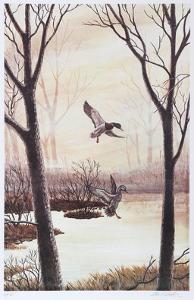 Coming in (Ducks) by Allen Friedman
