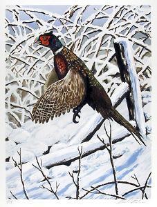 Ringnecked Pheasant by Allen Friedman