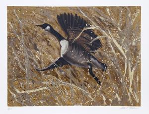 Squawking Honker by Allen Friedman