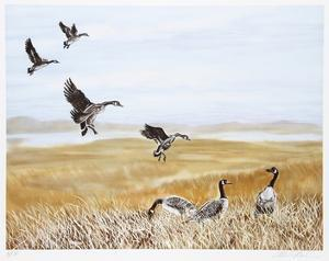 Wild Geese by Allen Friedman
