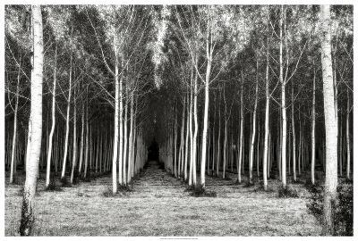 Alley At Lac D'uby-Colby Chester-Giclee Print